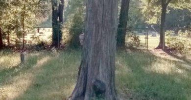 Google Maps Registra Imagem de Um Fantasma